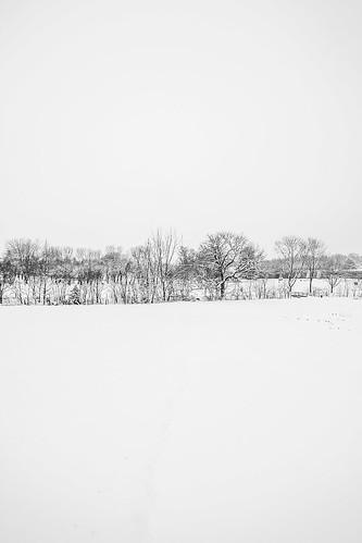 bw biancoenero blackandwhite snow neve trees alberi minimalistic