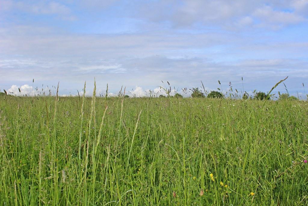 3-05-L'Inventaire des prairies