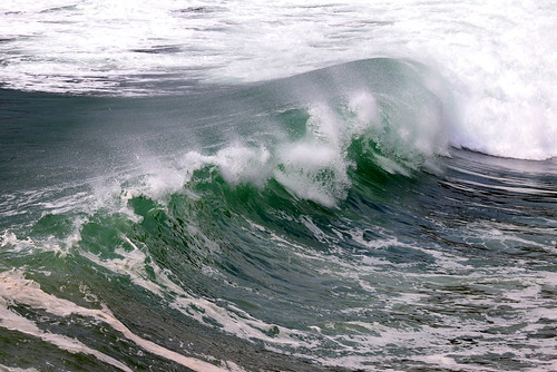 Lizard Wave