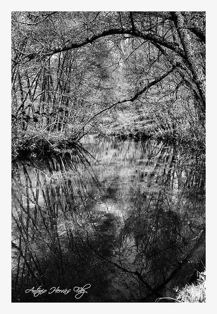 Reflejos en el río Arlanza