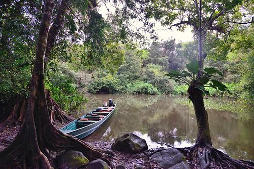 guyane guyanefrançaise frenchguiana rainforest forêt amazonie forêtprimaire