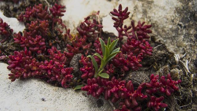 Flora en Andia4