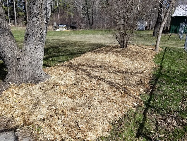 20190509.,cleanup.mulching.southeast.section.after.2