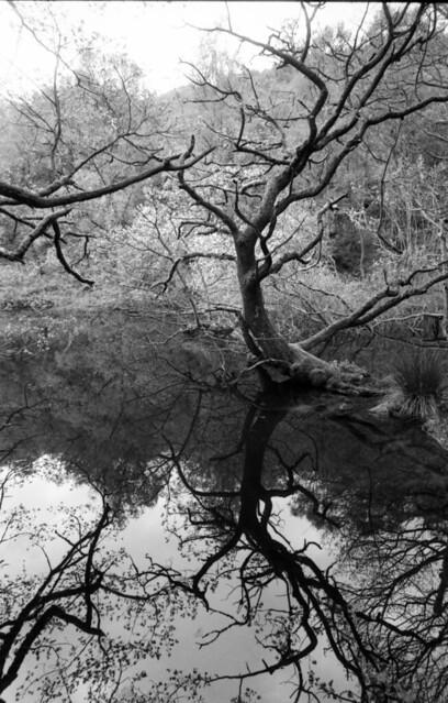 Arboreal Dance (Guisecliff Tarn)
