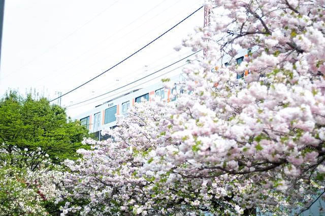 Sakura and Train