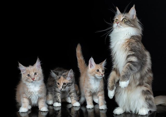 Family Pawtrait