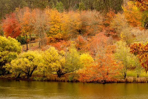 autumn colours trees mountloftybotanics rain southaustralia