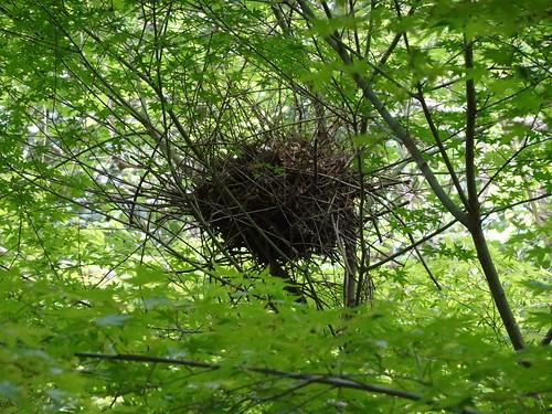 横浜自然観察の森で野鳥観察 鳥の巣