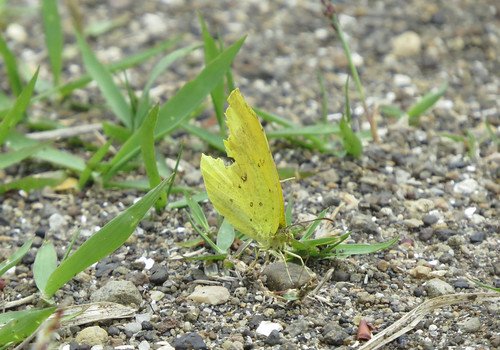 横浜自然観察の森で野鳥観察 蝶