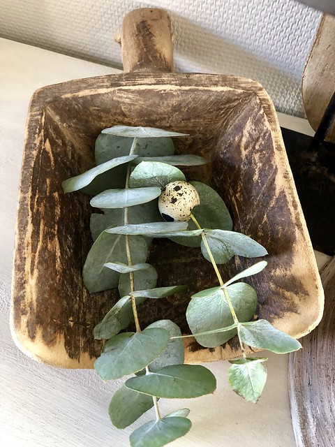 Houten schep Eucalyptus
