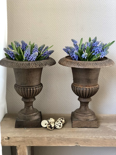 Blauwe druifjes in Franse vazen