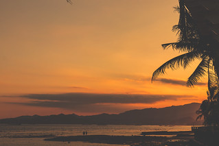 Tropical sunset with palm. Have space for text.
