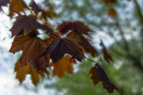 evening leaves