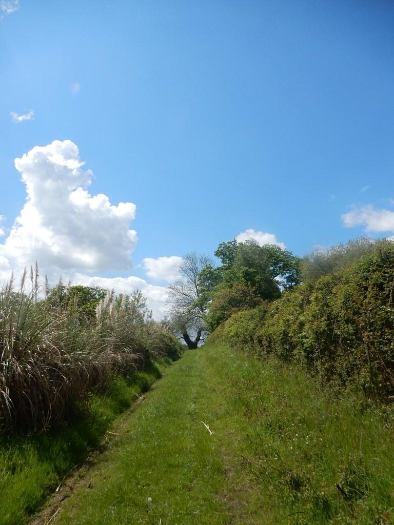 Forked tree ahead Aldermaston to Woolhampton
