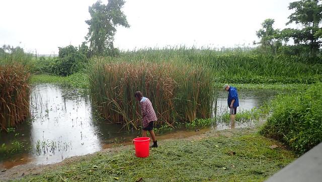 Bryozoan survey, Kranji Marshes