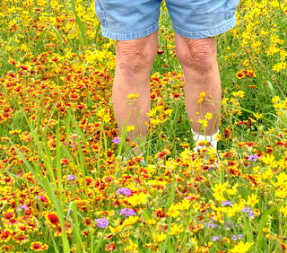 Roadside Wildflowers Texas 41