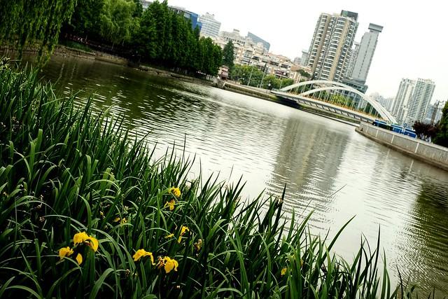 Shanghai, China - Sunday, May 12, 5:00 PM. #Shanghai #China #JingAn #SuzhouCreek #Spring #Flowers #Bridge #上海 #中国 #春 #花 #橋