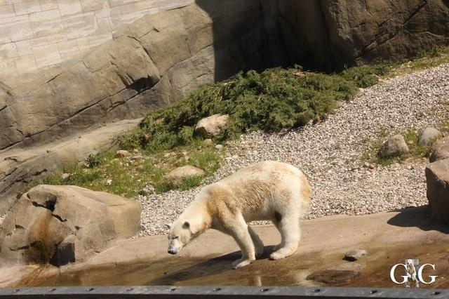 Besuch Zoo Rostock 22.+23.04.2019182