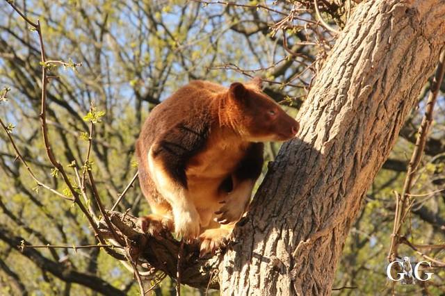 Besuch Zoo Rostock 22.+23.04.2019141
