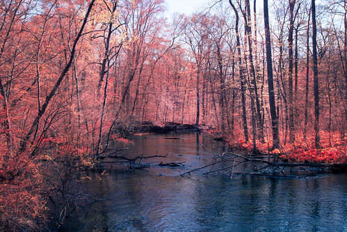decatur fredrussforestpark kolarivisionirchromelensfilter michigan us unitedstates infrared landscape outdoor sunny woods