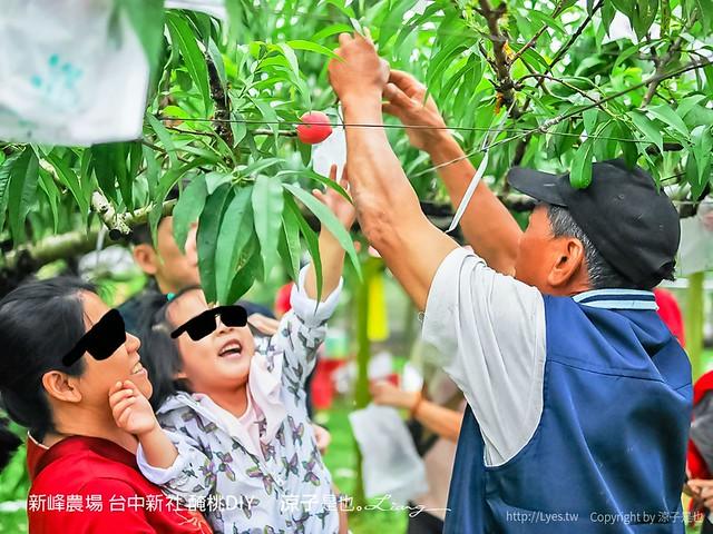 新峰農場 台中新社 醃桃DIY 4