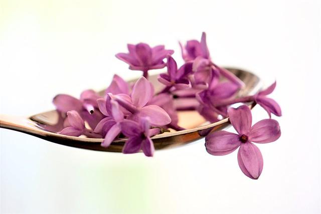 Spoonful of Lilac Petals