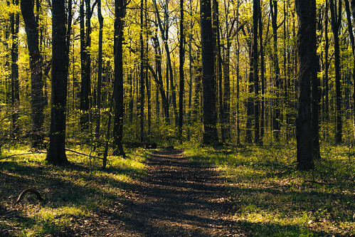 decatur fredrussforestpark michigan us unitedstates forest landscape outdoor path trail trees woods