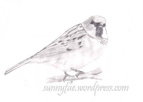 sparrow practice drawing