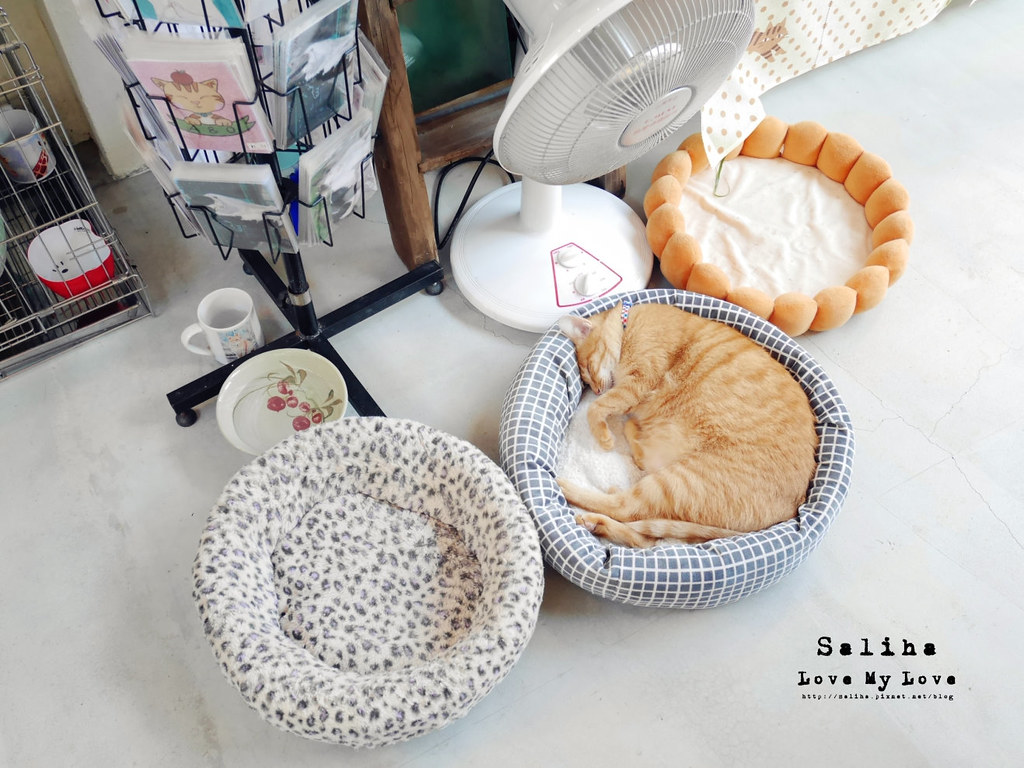 新北瑞芳猴硐Empress Gallery Catwalk 219有貓咪咖啡館下午茶 (1)
