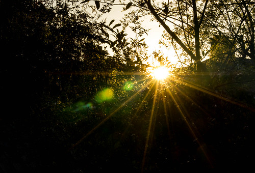 sun morning garden lensflare sunrise 2019p52