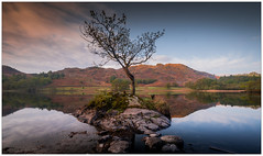 That Rydal Tree