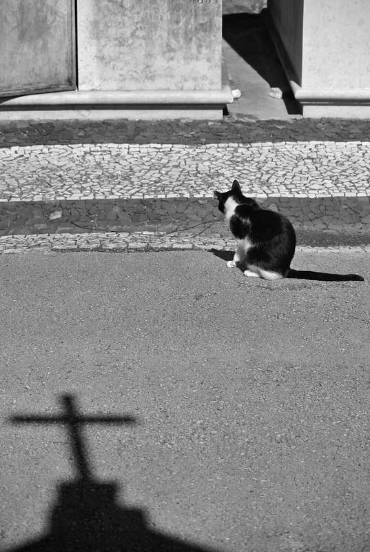Lisbon_2019_537