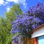 Spring colours in Preston