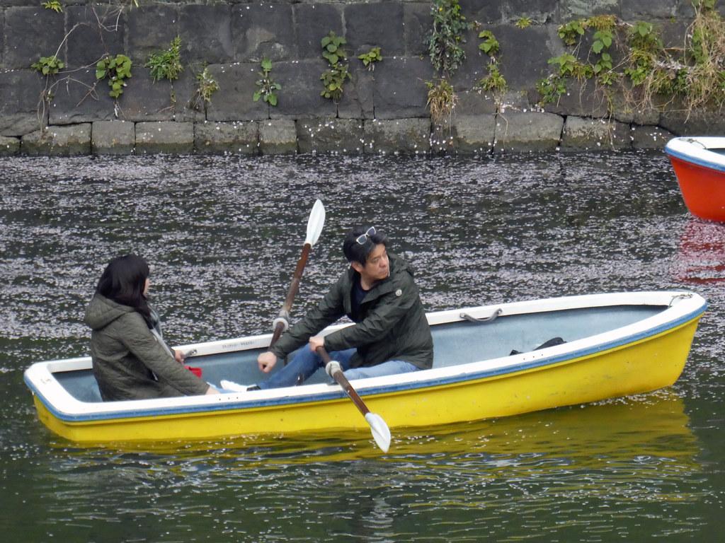 Лодка в лепестках сакуры