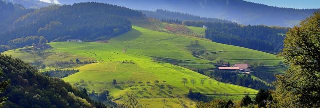 Vertes prairies en Forêt Noire - Allemagne