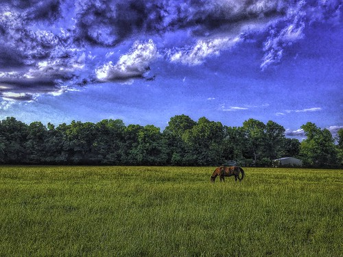Sky and horses 2-Edit