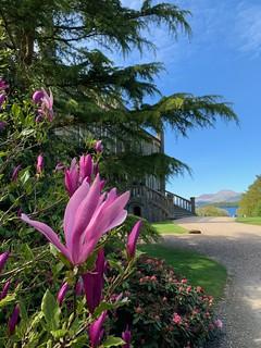 Magnolia to Ross Priory to Loch Lomond to Ben Lomond