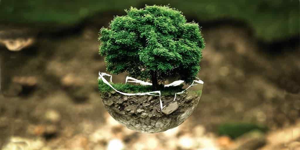 arbres-plantation-changement-climatique