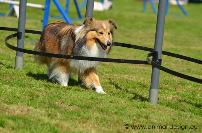 2012 Agility Plausch-Meeting