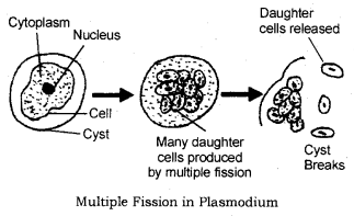 How do Organisms Reproduce Class 10 Notes Science Chapter 8 2