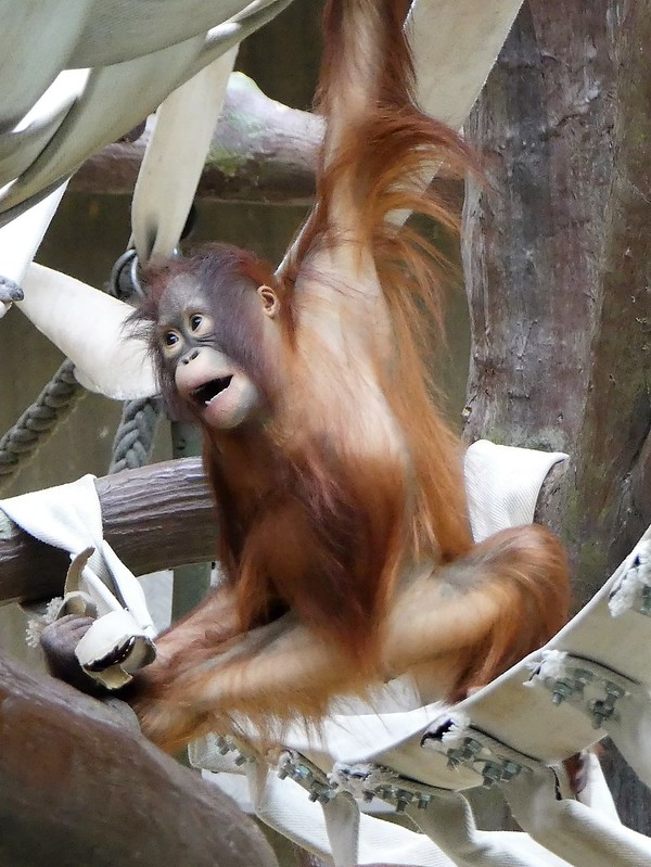 Zoo Krefeld
