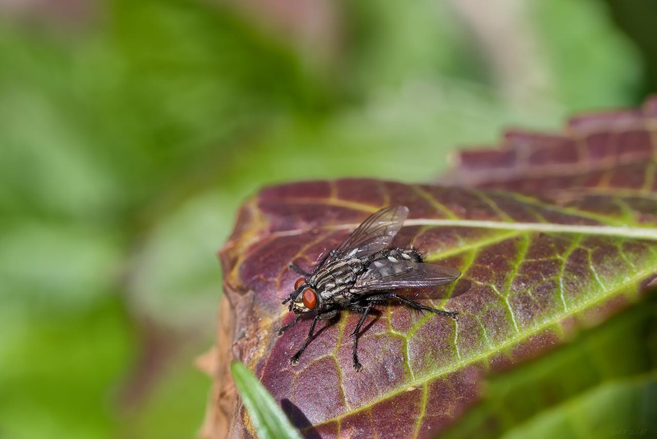 Macros/  proxi/  insectes  - Page 27 33986074748_49814826c2_o