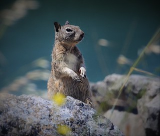 Miller Knox~~Ground Squirrel  05/11/2019