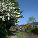 Spring on the canal at Preston