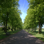 Tree avenue at Haslam Park, Preston
