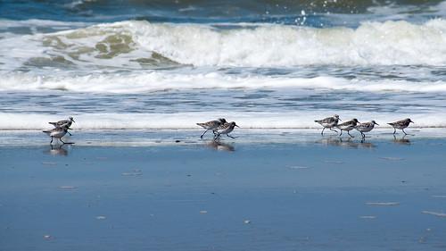 Bird Race   by Ron@ld53