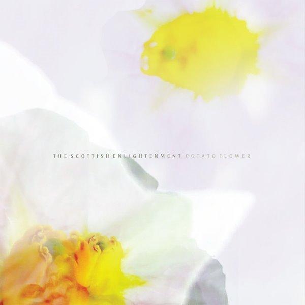 The Scottish Enlightenment - Potato Flower