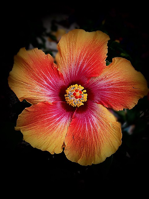 I've never seen this flower in these colors!