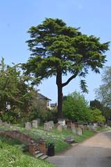 The Woodbridge dead