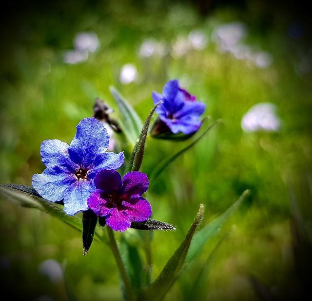 Blüten.....